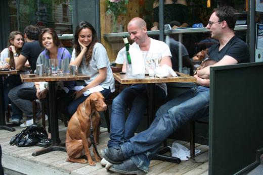 1199823_dog_restaurant