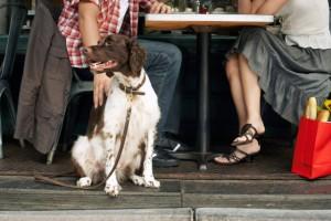 dog-in-restaurant-640x427